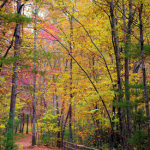 mountain-hiking-trail-romantic-asheville