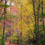 mountain-hiking-trail-romantic-asheville