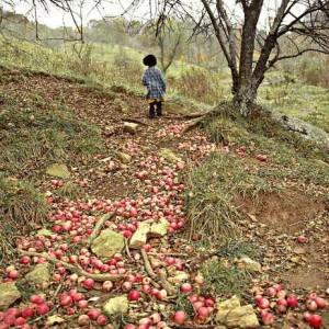 Apple-Trail