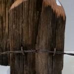Locust fence post vases