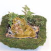 Ceramic Fairies: How to Make Fairy Gardens